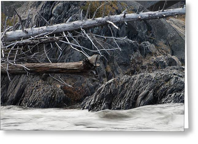 Driftwood On The Rocks Greeting Card