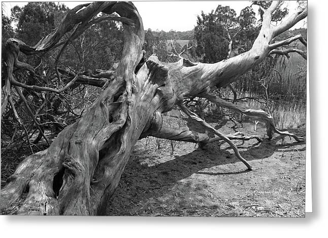 Driftwood Study In Black And White Greeting Card by Suzanne Gaff