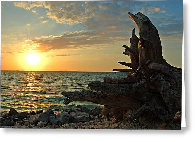 Driftwood Sunset Greeting Card by Susanne Van Hulst