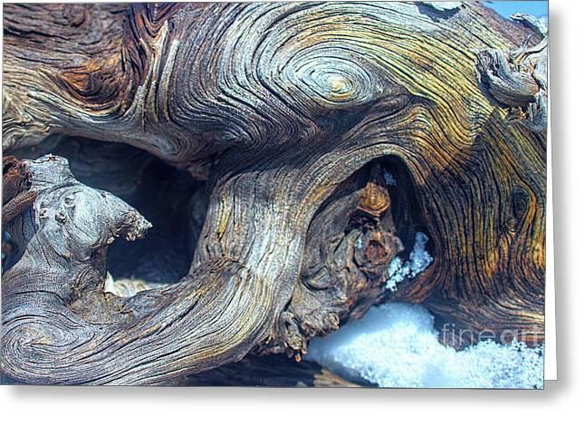 Driftwood Swirls Greeting Card