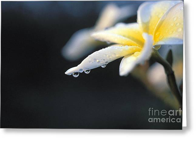 Dripping With Dew Greeting Card