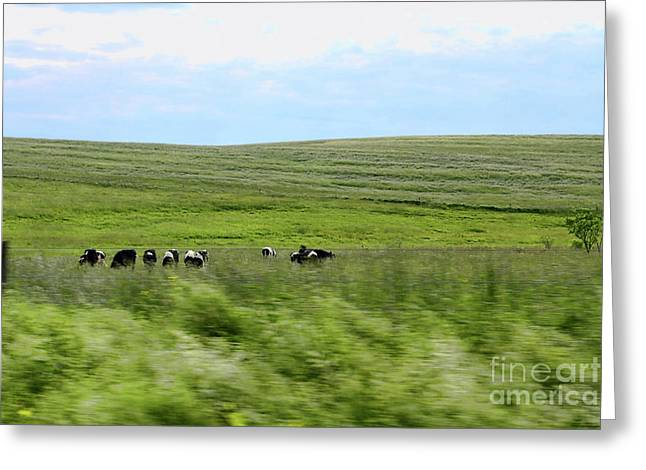 Driveby Shooting No.17 Cows Greeting Card by Christine Segalas