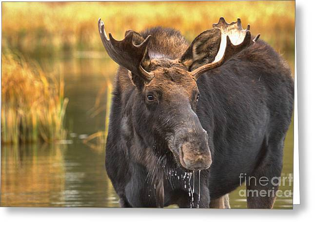 Drooling In The Wetlands Greeting Card by Adam Jewell