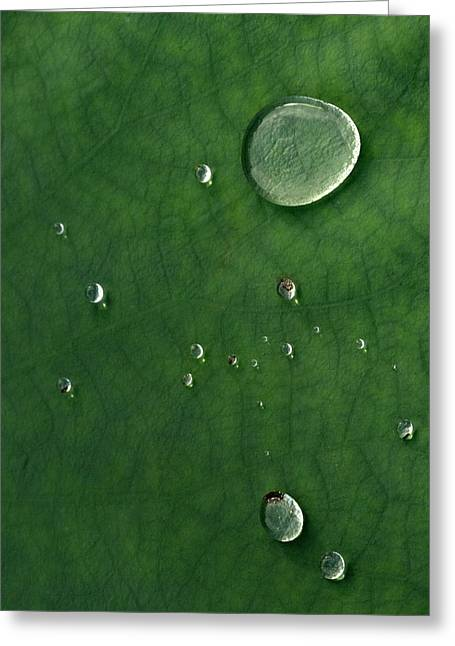 Droplet Of Life Greeting Card
