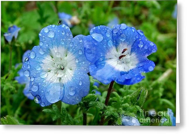 Droplets Of Water Greeting Card by Joe Cashin