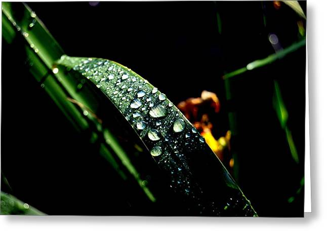 Droplets Of Water Greeting Card by Robert Scauzillo