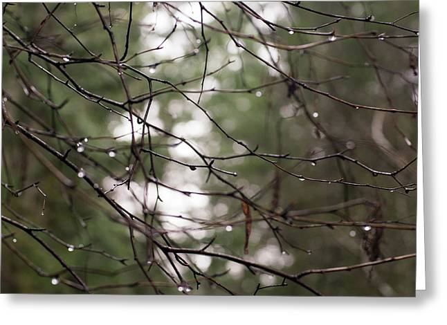 Droplets On Branches Greeting Card