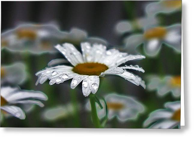 Droplets On Daisies Greeting Card by Emily Michaud