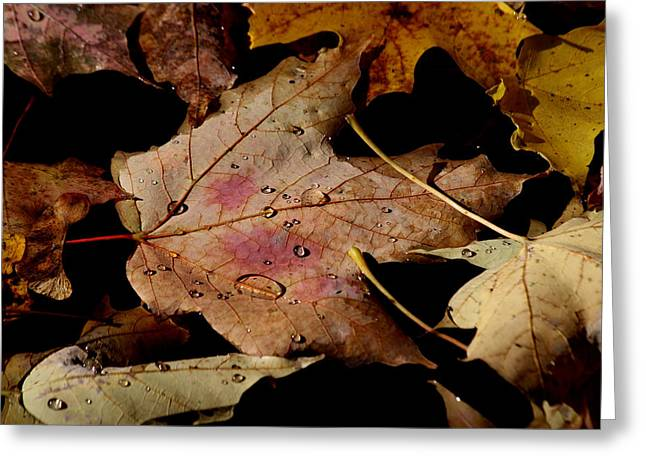 Greeting Card featuring the photograph Droplets On Fallen Leaves by Doris Potter