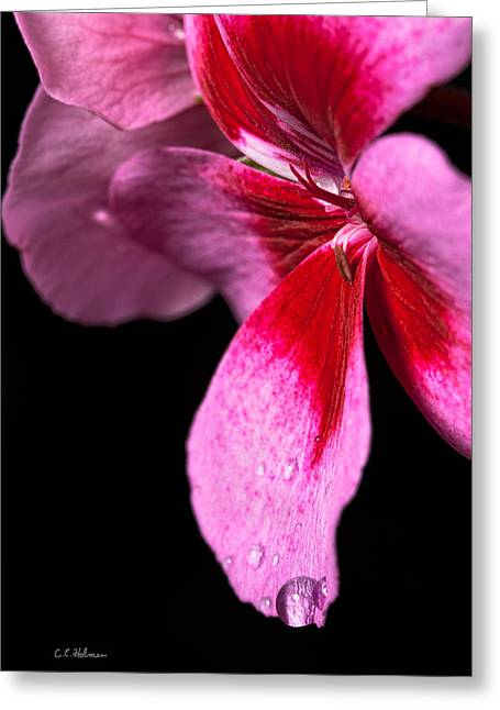 Droplets On Pink Greeting Card by Christopher Holmes