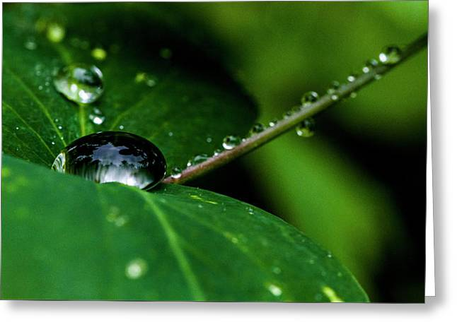 Greeting Card featuring the photograph Droplets On Stem And Leaves by Darcy Michaelchuk