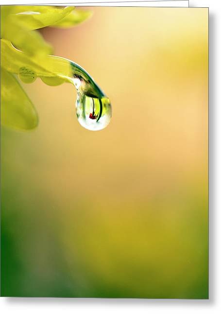 Drops Of Colorful Reflection Greeting Card by Laura Mountainspring