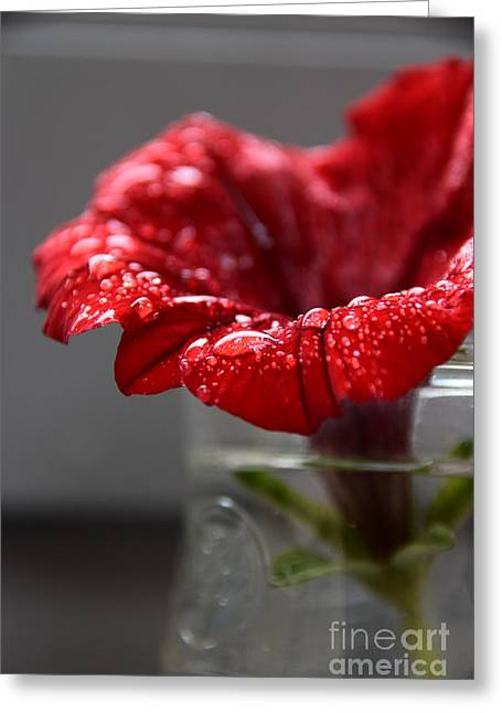 Drops On A Red Spring Flower Greeting Card by Ludmilla Resch