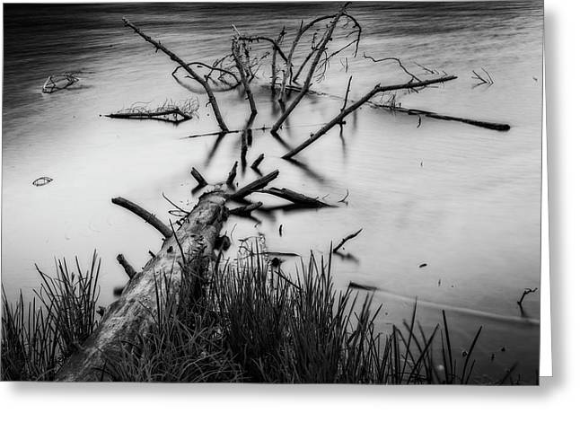 Greeting Card featuring the photograph Drowning by Alan Raasch