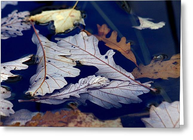 Greeting Card featuring the photograph Drowning In Indigo by Doris Potter