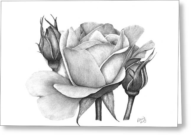 Drum Rose Greeting Card by Patricia Hiltz