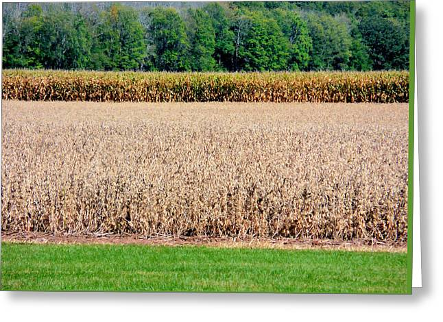 Dry Corn Field 1 Greeting Card by Lanjee Chee