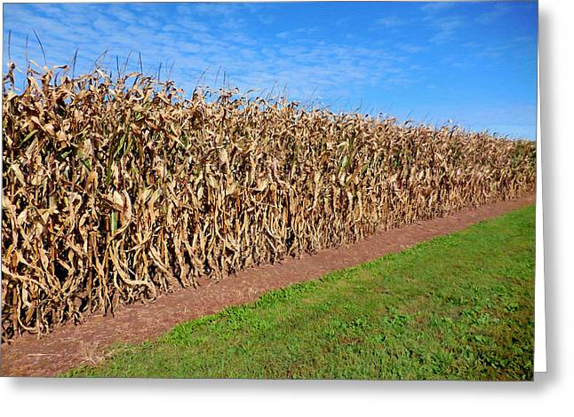 Dry Corn Field 2 Greeting Card by Lanjee Chee