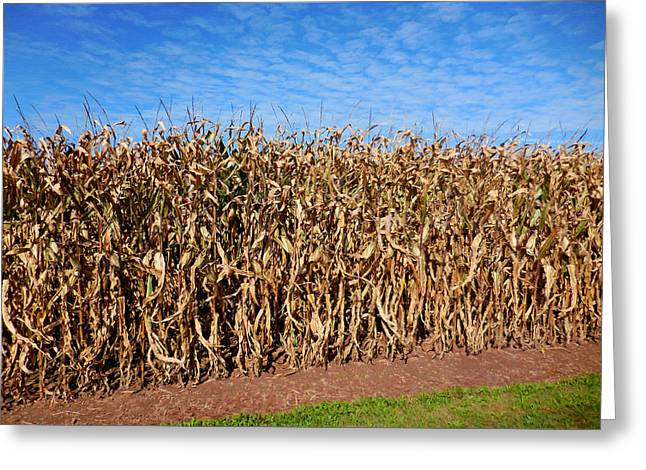 Dry Corn Field 3 Greeting Card by Lanjee Chee