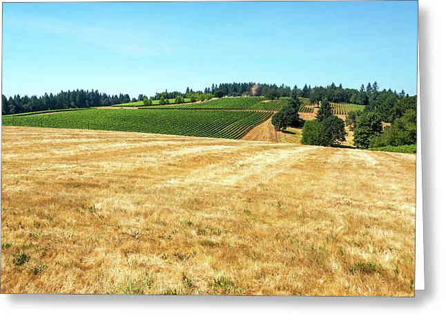 Dry Field And Vineyards Greeting Card