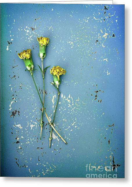 Greeting Card featuring the photograph Dry Flowers On Blue by Jill Battaglia