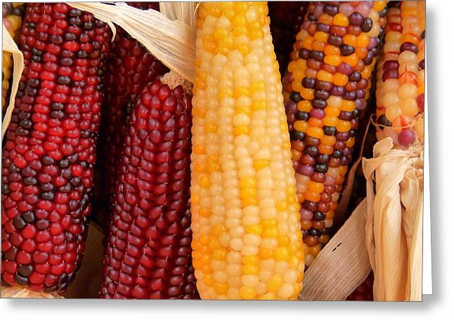 Dry Indian Corn Greeting Card