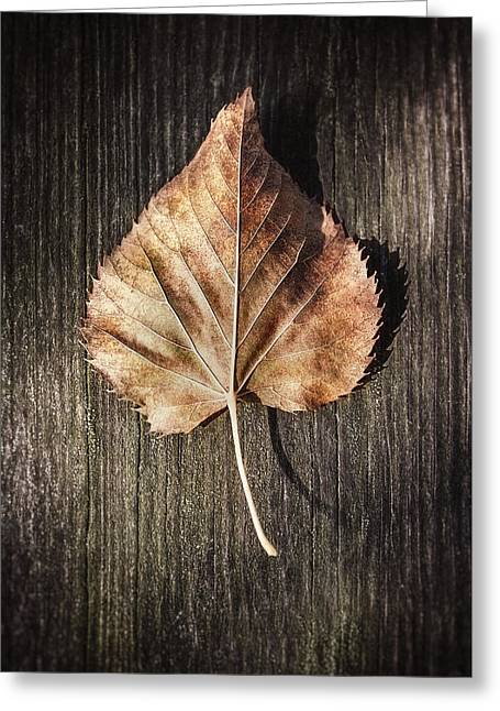 Dry Leaf On Wood Greeting Card by Scott Norris