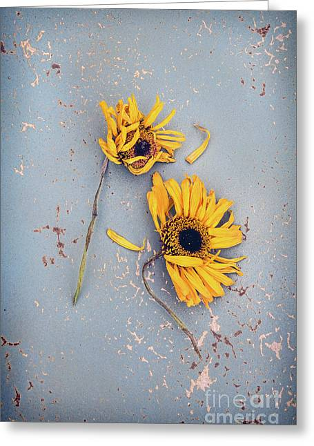 Greeting Card featuring the photograph Dry Sunflowers On Blue by Jill Battaglia