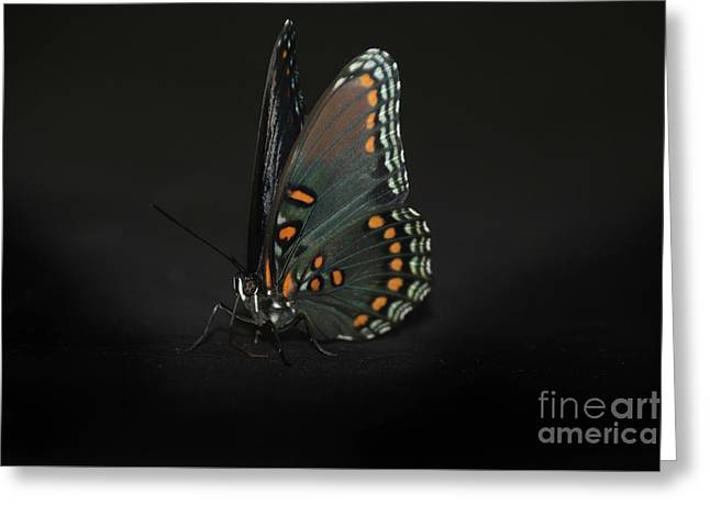 Drying Wings Greeting Card by Judy Hall-Folde