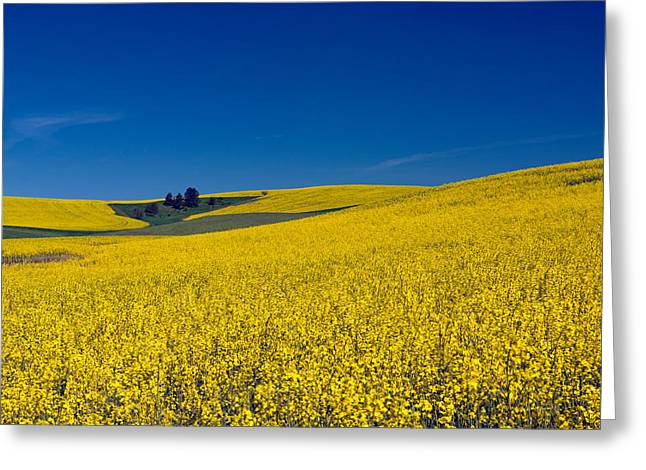 Dt816palouse Greeting Card by Leland D Howard