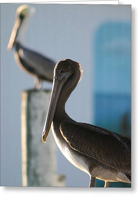 Dual Pelicans Greeting Card by Mary Haber