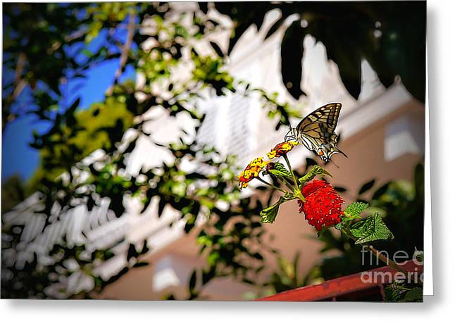Dubrovniks Butterfly Greeting Card