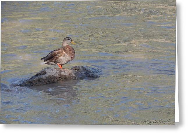 Duck Alone On The Rock Greeting Card
