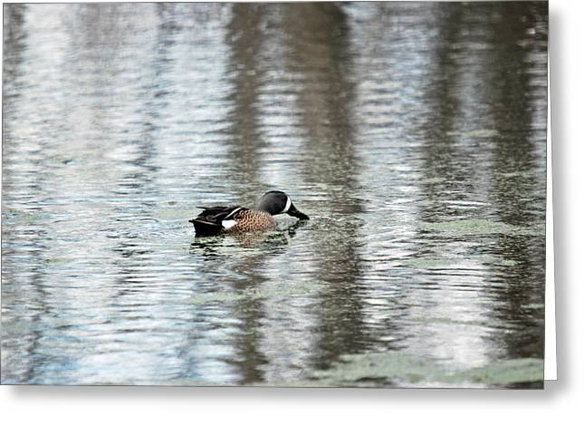 Greeting Card featuring the photograph Duck Alone by Teresa Blanton
