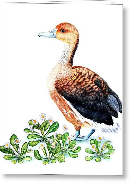 Duck And Daisies Greeting Card by Sandra Moore