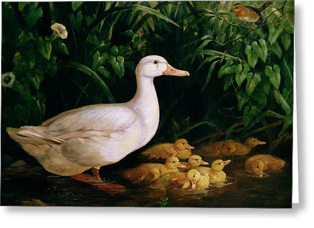 Duck Greeting Cards - Duck and ducklings Greeting Card by English School