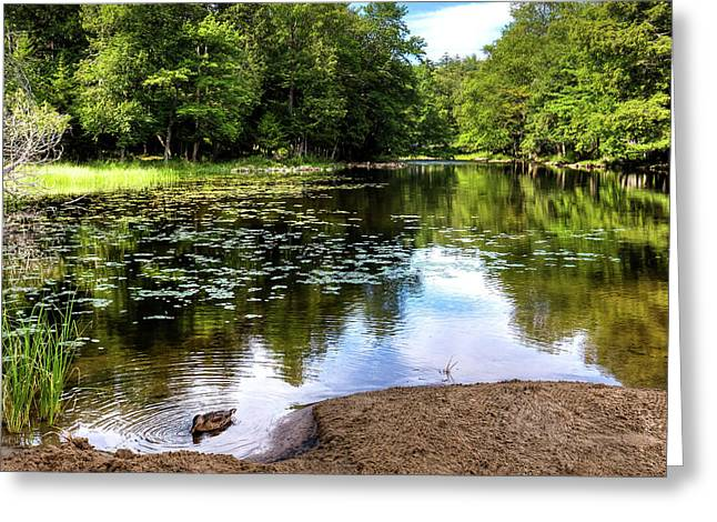 Greeting Card featuring the photograph Duck At Covewood by David Patterson