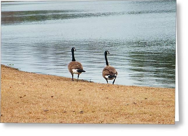 Duck By The Pond Greeting Card by Nereida Slesarchik Cedeno Wilcoxon