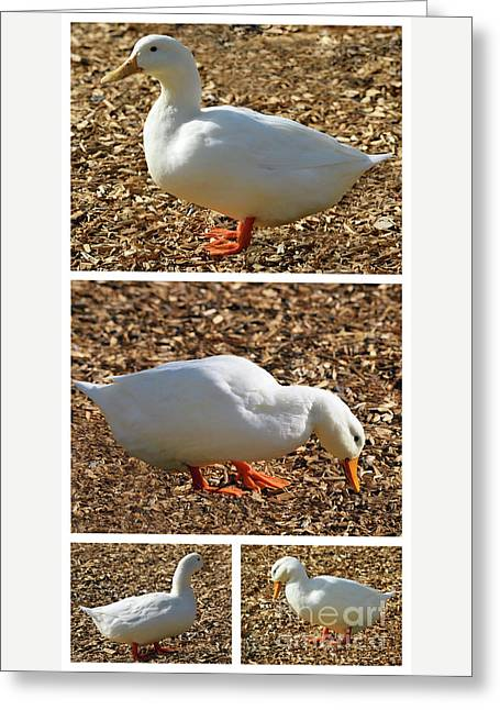 Greeting Card featuring the mixed media Duck Collage Mixed Media A51517 by Mas Art Studio