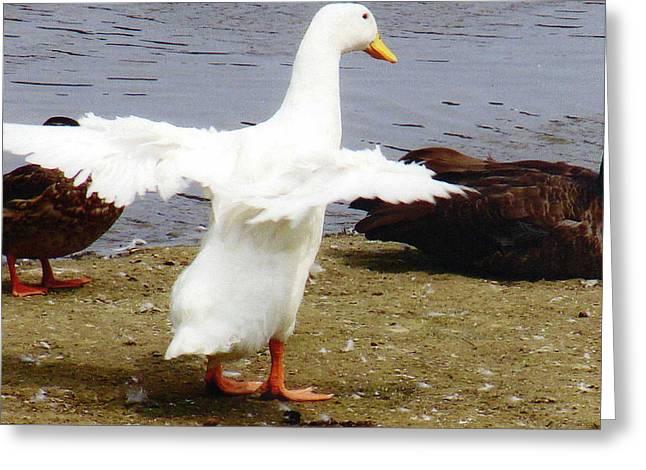 Duck Dancing Greeting Card by Renee Cain-Rojo