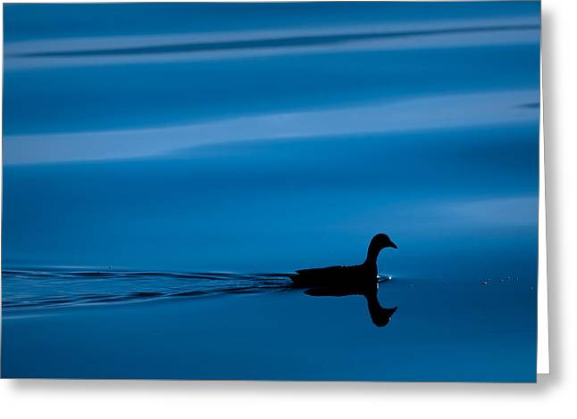 Duck Floating On A Lake Greeting Card by Dane Strom