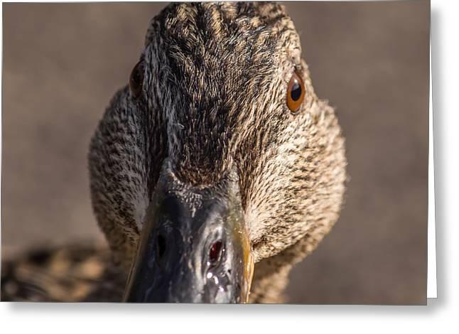 Duck Headshot Greeting Card