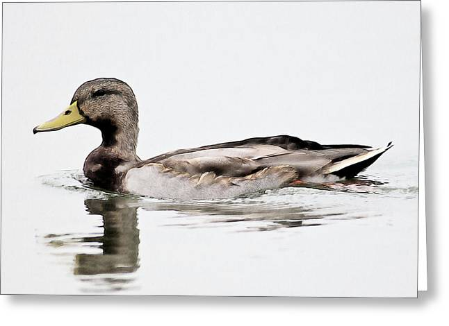 Greeting Card featuring the photograph Duck by John Hix