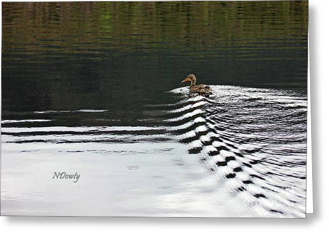 Duck On Ripple Wake Greeting Card