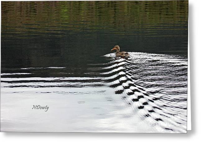 Duck On Ripple Wake Greeting Card