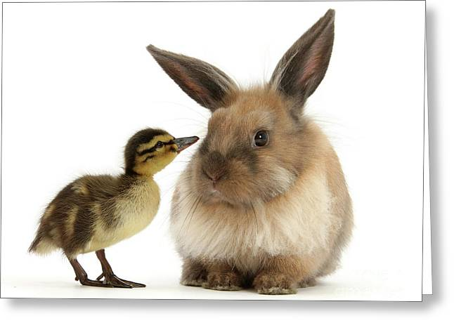 Duck Out Bunny Greeting Card