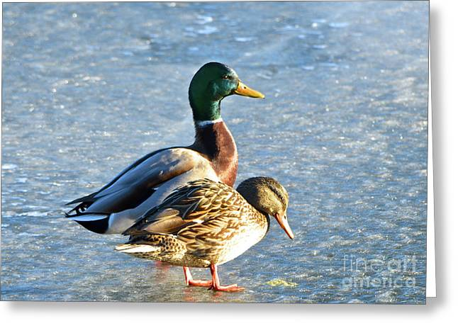 Duck Pair On Frozen Lake Greeting Card