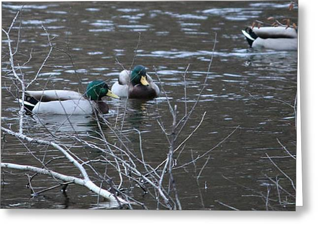 Duck Pond Greeting Card by Barretreasures Photography