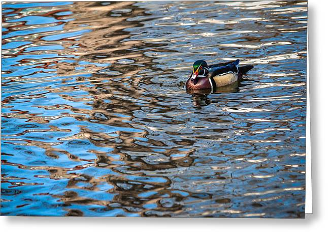 Duck Pond Greeting Card by John Hesley