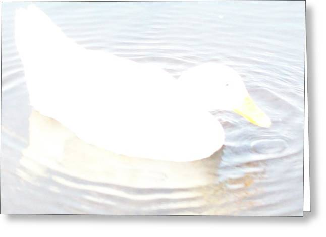Duck Relaxing Greeting Card